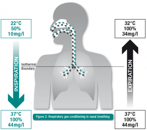 Figure2_Respiratory gas conditioning in nasal breathing